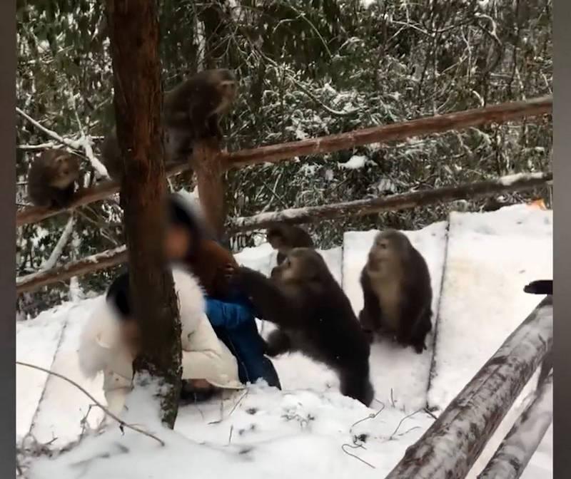兇猛的猴子還爬上女遊客的背部,不停地拉扯她的外套及撕咬頭髮。(圖取自「漩渦視頻」影片)
