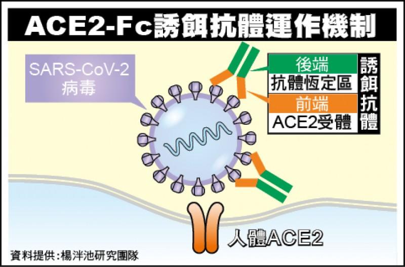 ACE2-Fc誘餌抗體運作機制