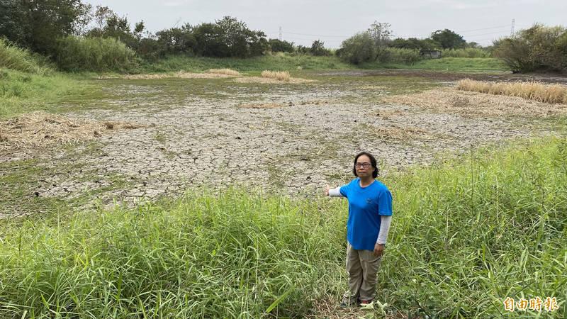 1期稻作停灌,無水可用,官田水雉園區主任李文珍手指園區內生態池乾涸。(記者楊金城攝)