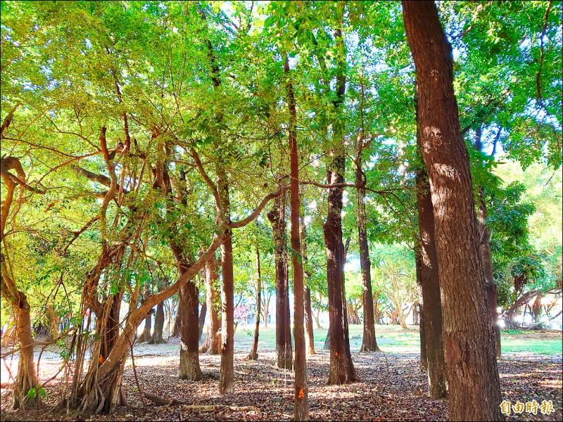 平實轉運站預定基地,現地有如一片「市區森林」,未來站體興建對於樹木的保留計畫引發關注。(記者洪瑞琴攝)