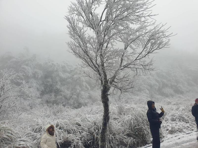 台七甲線下雪,白色世界,吸引民眾上山賞雪。(圖由民眾提供)