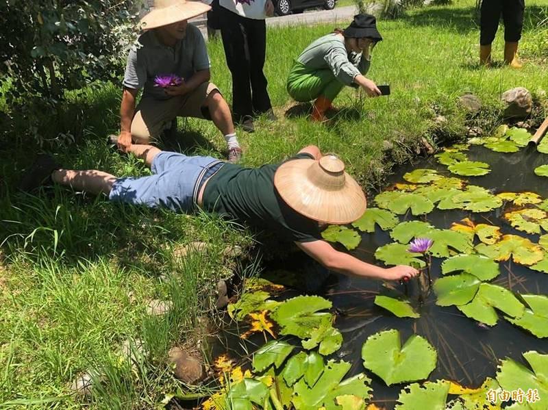 民眾夏天到「綠田農莊」體驗採蓮花。(綠田農莊提供)(記者蔡昀容攝)