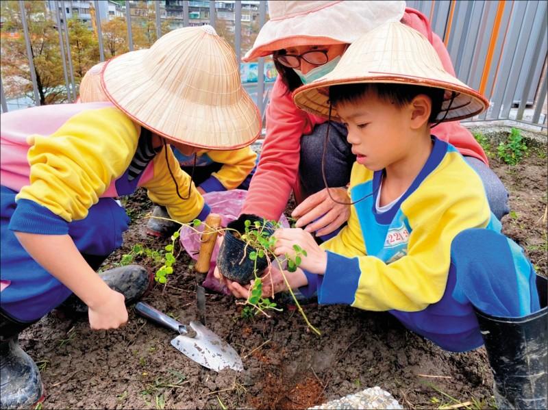 永建國小低年級學生觀察植物的生長情形。(永建國小提供)