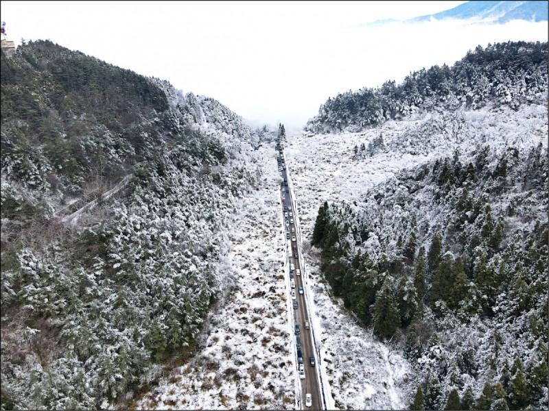 白雪美景吸引民眾上山追雪,台七甲線上車輛絡繹不絕。(武陵農場提供)