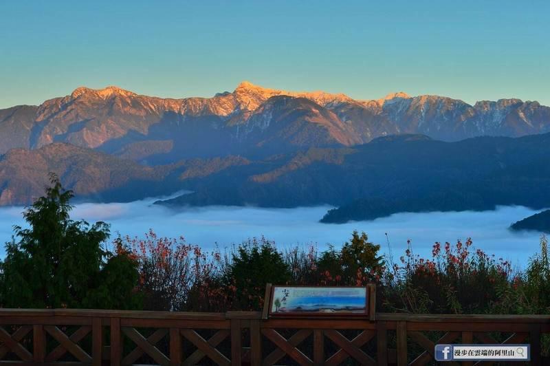 阿里山可遠眺玉山積雪,搭配陽光灑落、雲海及楓紅,形成金粉雪坡的冬季限定美景。(翻攝漫步在雲端的阿里山臉書)