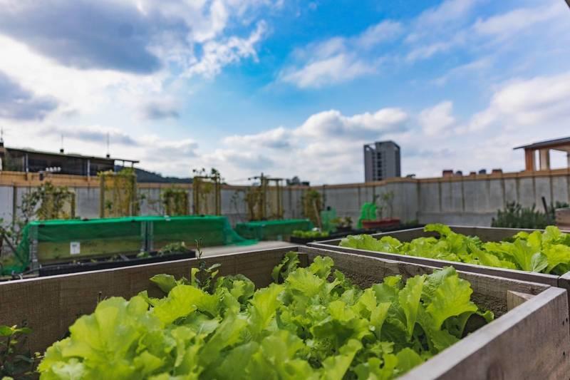 對抗熱島效應,新竹市力推建築綠化。(市府提供)