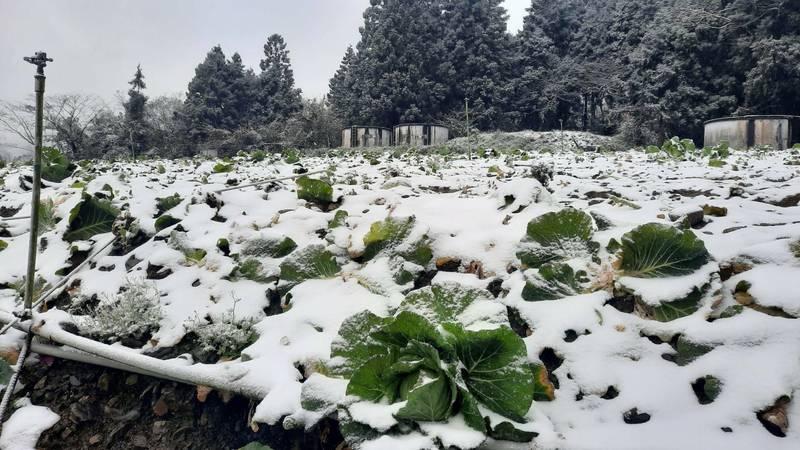 大同鄉四季村菜園上週被一片雪白覆蓋。(民眾提供)
