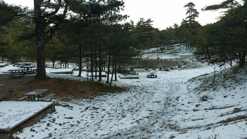 福壽山農場白雪皚皚。(記者張軒哲翻攝)