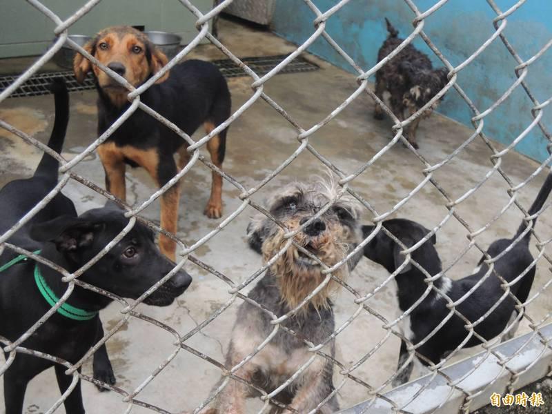 台南市的流浪犬超過2萬隻,但公立收容所卻僅能收容約1000隻,收容量嚴重不足。(記者蔡文居攝)