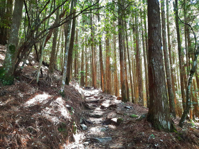馬崙山沿途林相優美。(記者張軒哲翻攝)
