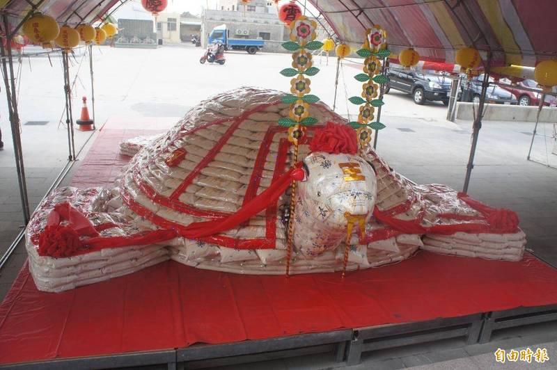 今年澎湖元宵乞龜熱提前引爆,龍門安良廟大米包龜提前過年前擺設完成。(記者劉禹慶攝)