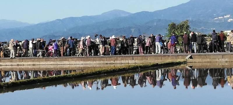 斑頭雁在宜蘭現蹤,礁溪鄉時潮村田間小路湧入鳥友搶拍,熱鬧非凡。(圖由拍鳥俱樂部Jeremy Wang提供)