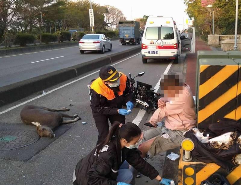 彰化市東外環道昨天發生1頭水鹿慘遭車輛撞斃的「鹿殺」事故,造成1名機車騎士受傷。(記者湯世名翻攝)