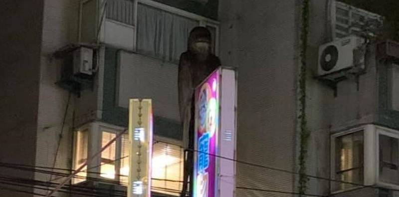 民眾發現1間商店的招牌後方有個「戴口罩」的黑影,照片曝光嚇壞網友。(圖取自靈異公社)