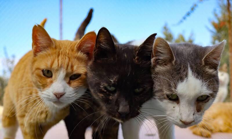 疫情衝擊外籍主人返國棄養 賽普勒斯流浪貓激增