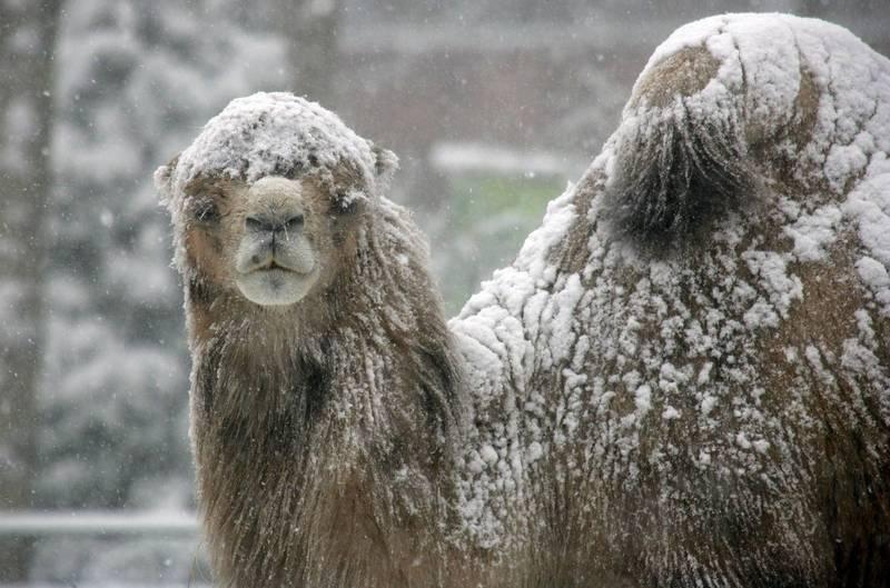 氣象學家表示,沙漠地區很少下雪,但並不代表完全不會下雪。示意圖。(歐新社檔案照)