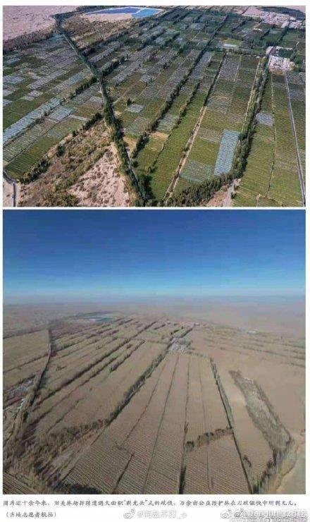 不料近日卻被人踢爆,該林場近十餘年來持續遭大面積「剃光頭」式砍伐,只為種植耗水量大、需頻繁擾動地表土層的葡萄。(圖取自微博)