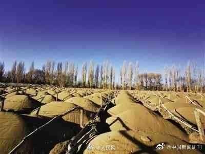 中國第6大沙漠庫姆塔格沙漠,每年以約4米的速度整體向東南擴展,全靠曾經擁有近2萬畝防護林帶的國營敦煌陽關林場擋著。(圖取自微博)