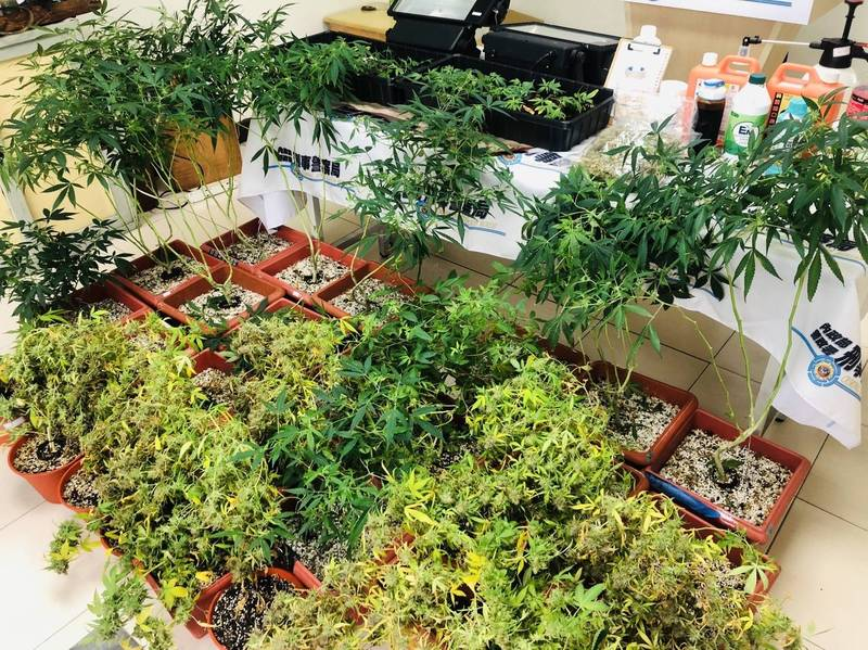 警方在台南市南區某民宅查獲市值逾5千萬的大麻。(記者黃佳琳翻攝)