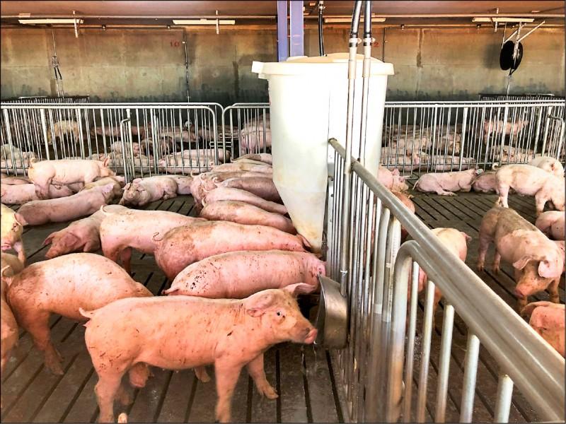 去年第四季中國復養豬隻而大量採購黃豆,造成國際行情上漲且缺貨,(資料照)