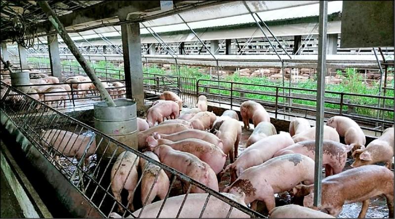 農委會指出,台灣生鮮豬肉、雞肉從來沒有出口中國,加工品從二○一四年底後就被中國單方面停止出口,後續持續詢問都已讀不回。(資料照)
