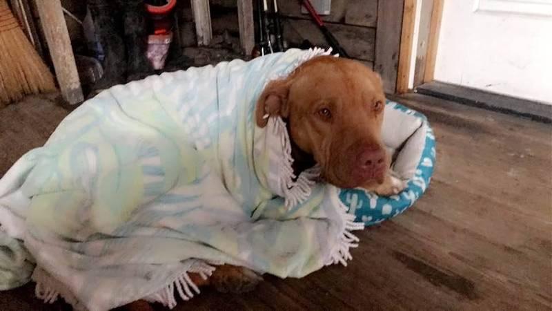 美國南卡羅萊納州近日傳1名6歲男童,遭到比特犬攻擊死亡。(圖擷取自Victoria Rose LaBar臉書)