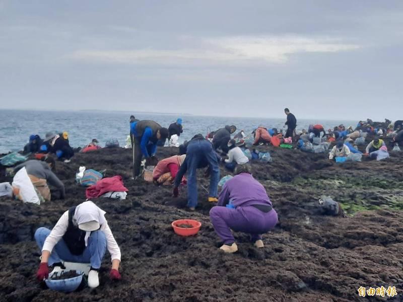 澎湖最大黑金產地姑婆嶼無人島,湧入大批民眾採收紫菜。(記者劉禹慶攝)