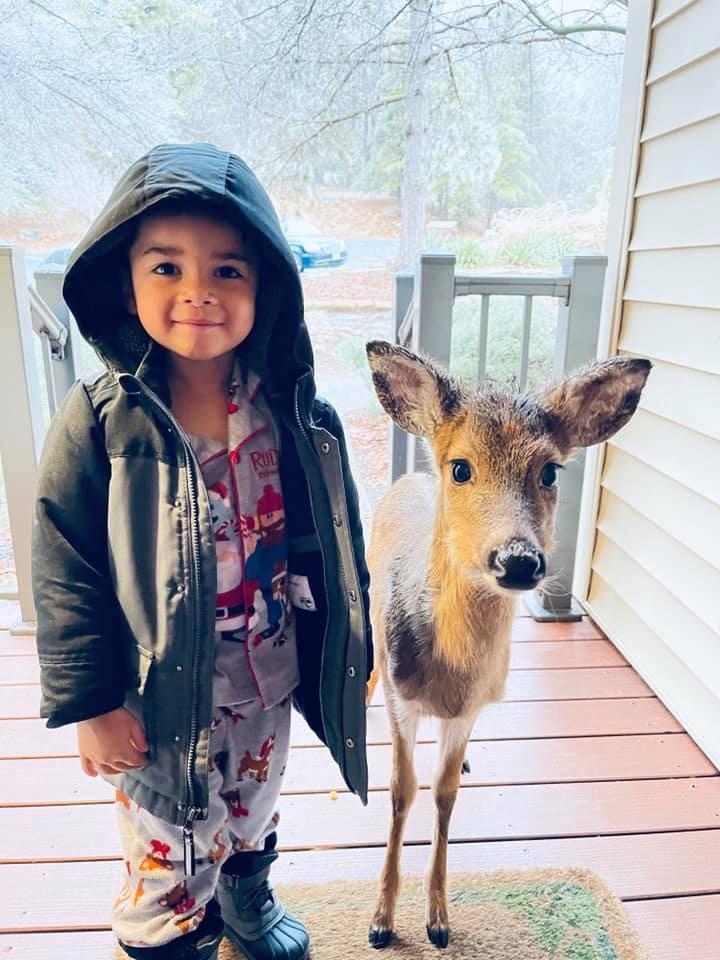 美國有名4歲男童日前與家人一起出外旅遊,結果在一家人即將回家前,這名男童竟帶著新認識的朋友:一頭小鹿出現在母親面前。(圖擷自臉書)
