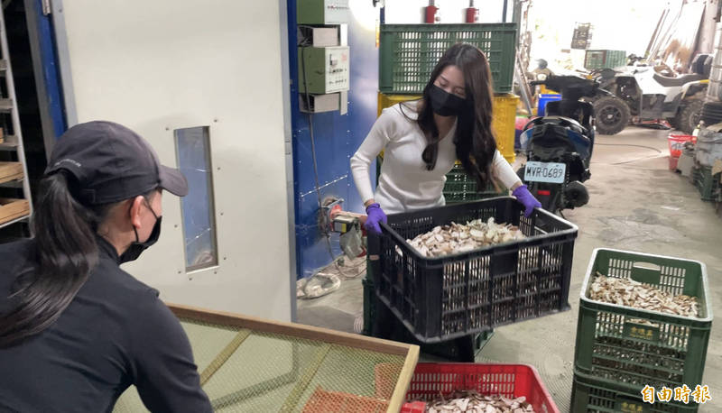王新雅(右)幫母親抬重約10公斤的大籃香菇也難不倒她。(記者佟振國攝)