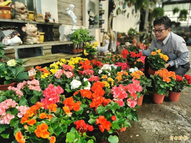 農曆年將至,應景園藝盆栽開始熱賣。(記者吳俊鋒攝)
