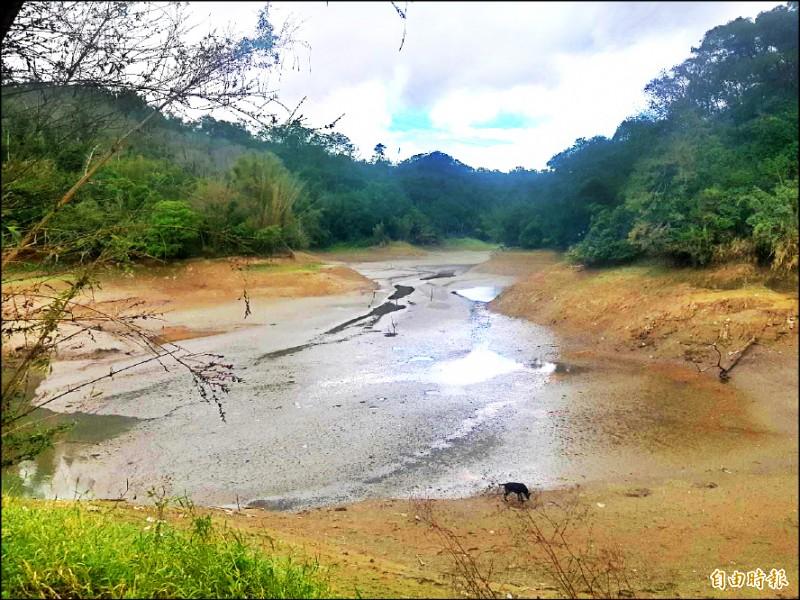 寶山水庫一度水位甚低,不少區域幾近乾涸,枯樹露出,甚至宛如「青青草原」。 (記者廖雪茹攝)