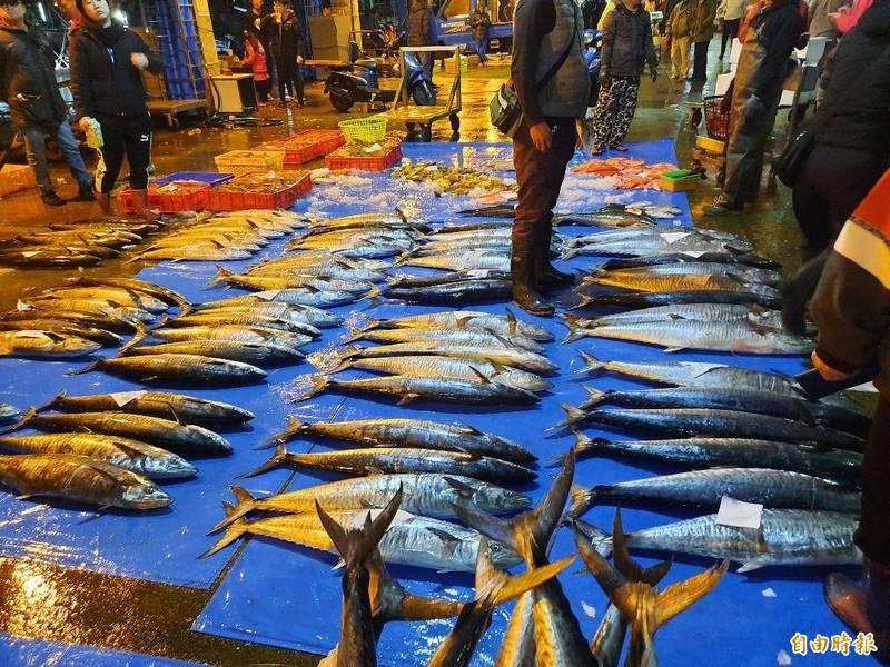 澎湖魚市場因土魠大豐收,尚未天亮之際就人聲鼎沸。(記者劉禹慶攝)