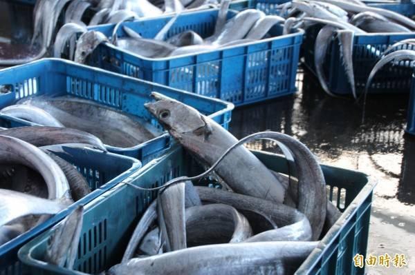中國天津查出流動攤商販賣的冷凍白帶魚有新型冠狀病毒。白帶魚示意圖。(資料照)