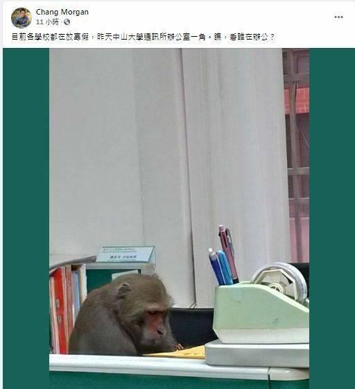 「瞧,看誰在辦公?」引發熱議。(擷取自Chang Morgan臉書)