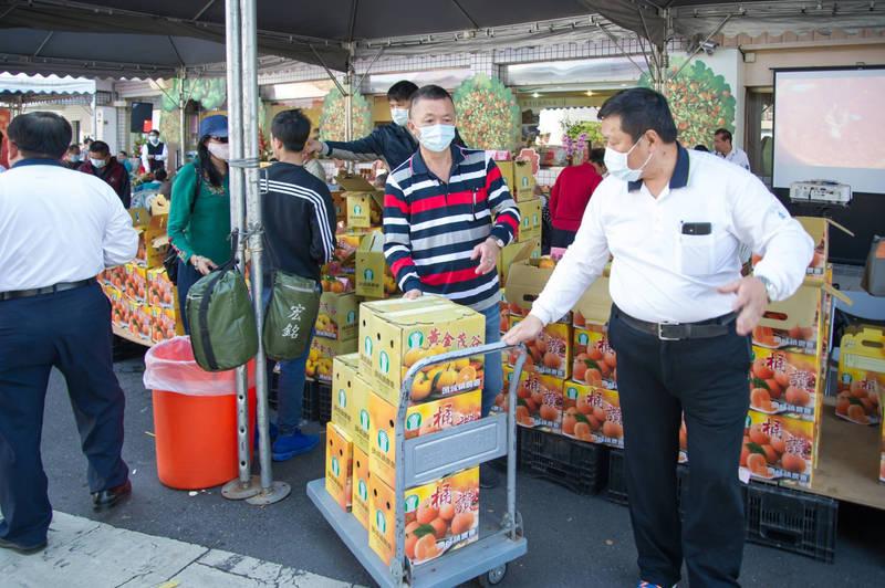 頭城鎮農會於2011年引進黃金茂谷柑,歷經10年的試驗及調整栽培管理模式,成果相當顯著,今正式上市發表。(宜蘭縣政府提供)