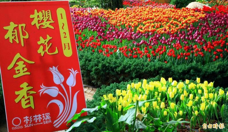 杉林溪森林生態渡假園區透過指示牌「郁」金香推動花名正名運動。(記者謝介裕攝)