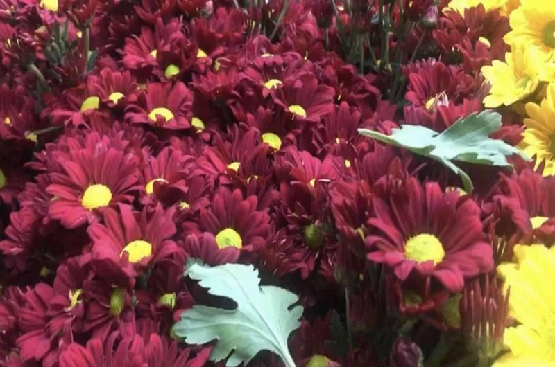 今年農曆春節前夕花卉買氣提升,花卉整體價格上漲2成。(記者湯世名翻攝)
