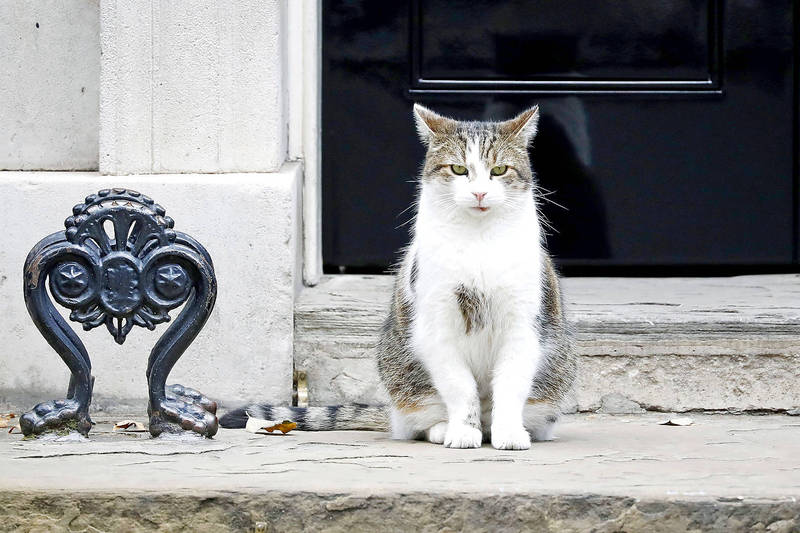 Larry the Cat sits outside the front door of 10 Downing Street, the official residence of the prime minister, in London on Sept. 2, 2019. Photo: AFP