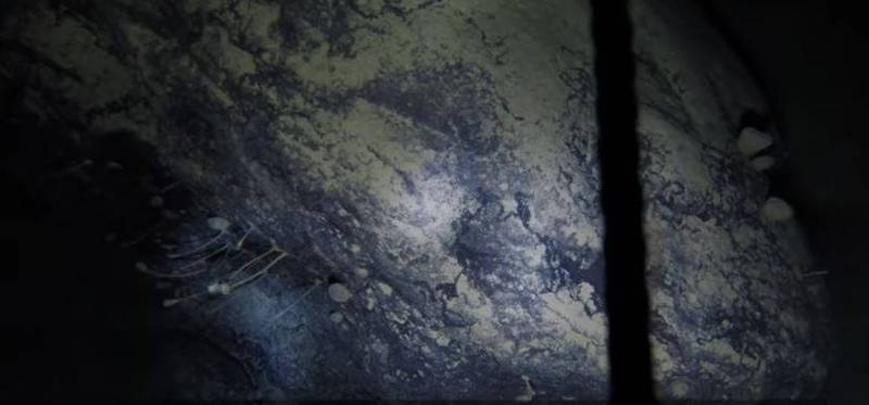 科學家最新在南極冰棚數百公尺厚冰層下的深海,發現一塊附有多種活體生物的巨石,宛如一塊「活石」。(擷取自YT)