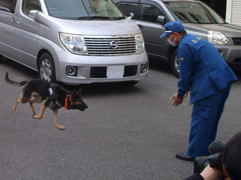 2歲公警犬「KREVA號」,過去曾在搜索任務中逃走,警方曾檢討是否讓牠退休。(圖取自推特《兵庫県警察ツイッター》)