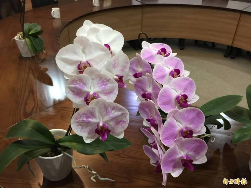 興大找到讓蘭花「花容失色」關鍵,正常蝴蝶蘭花色(右),經調控基因蛋白後出現花朵深淺不同等變化。(記者蘇孟娟攝)