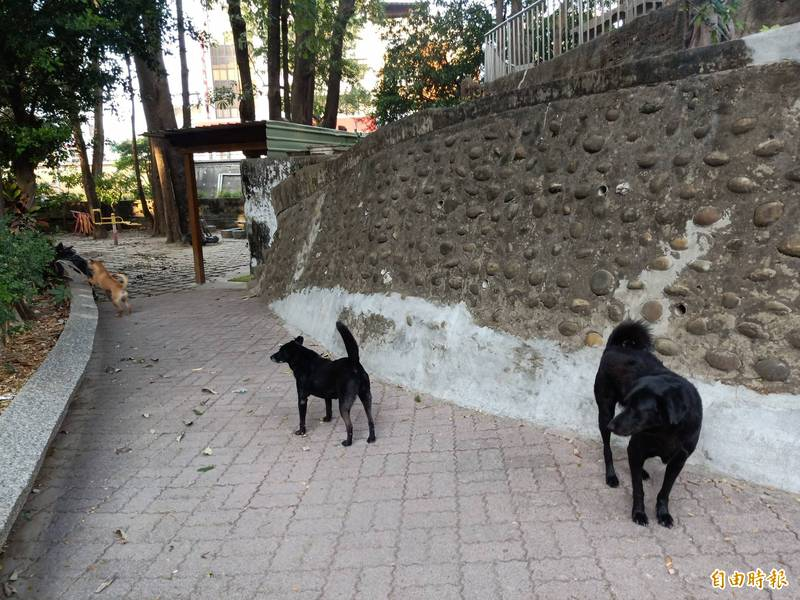 台南公園裡有不少體型偏大的流浪犬出沒,遇陌生人會警戒吠叫。(記者王姝琇攝)