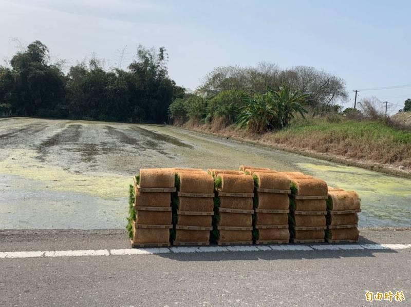 雲林一期稻作已播種7成,春耕用水勉強足夠。(記者林國賢攝)