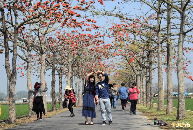 去年白河林初埤木棉花季吸引遊客走春盛況。(記者楊金城攝)
