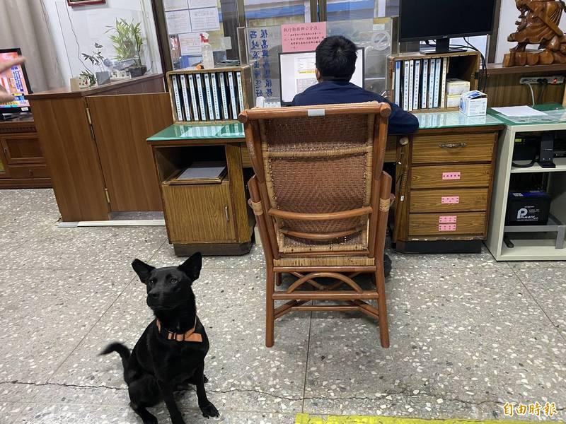 西岐所所犬妞妞陪員警值班。(記者張軒哲攝)