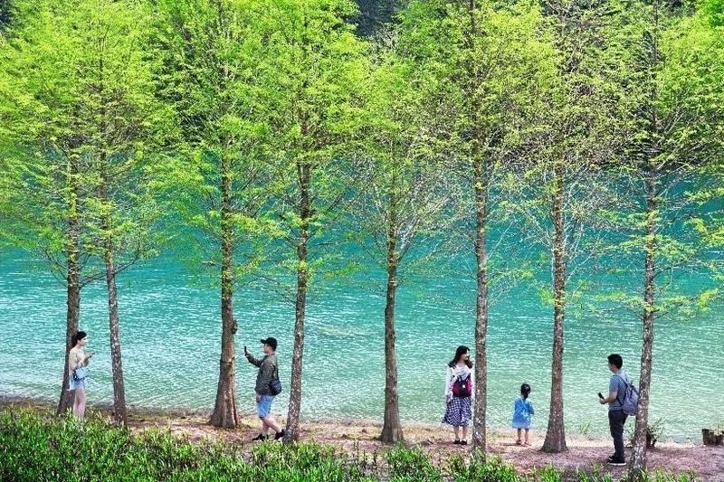 日月潭攝影比賽金獎-王世光「林中」。(圖:觀光局日管處提供)