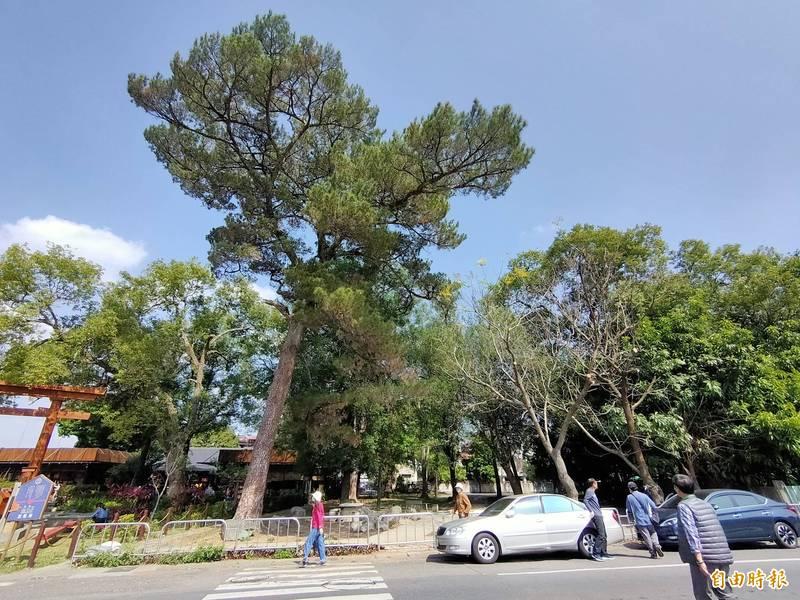 埔里鎮西門里公誠路旁有0.4公頃的老樹公園,<b><a href=
