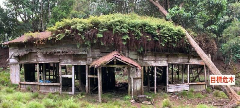 八通關越道太魯那斯駐在所,屋頂上方遭風倒木重壓。(樂葉樹藝有限公司提供)