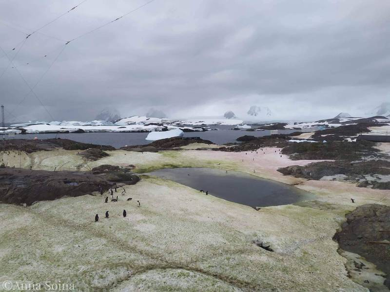 科學團隊指出,南極的雪地被藻類「上色」與當地暖化有關。(圖取自Національний антарктичний науковий центр Анна Soyna)