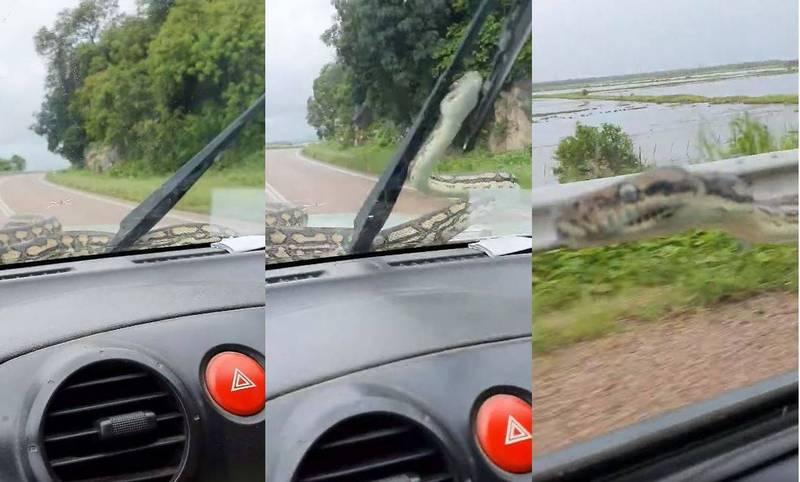 澳洲一對夫妻日前開車在高速公路上,突然有一條約3公尺長地毯蟒爬到擋風玻璃上,嚇得驚慌失措、不斷尖叫。(圖擷取自Melissa Hudson臉書)